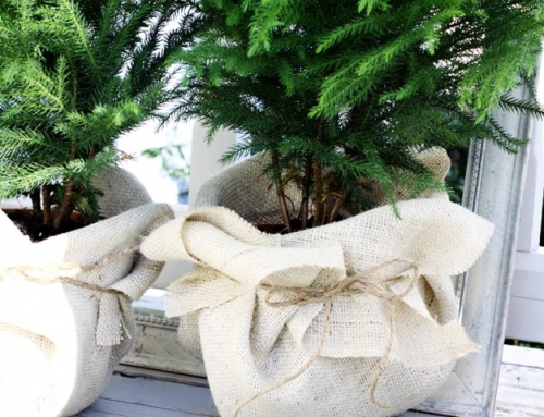 Mini Trees wrapped in burlap. Love of Home