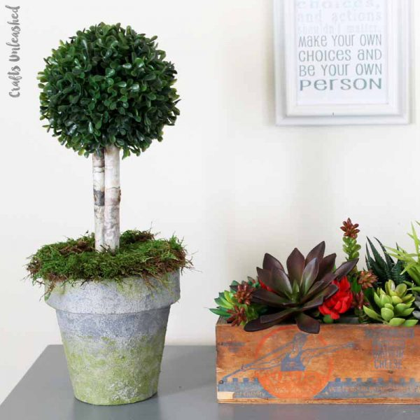diy-pot-boxwood-topiary-consumer-crafts-unleashed-007
